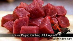 Khasiat Daging Kambing Untuk Ayam S128